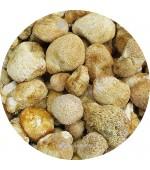 猴頭菇半斤